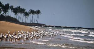 sea-eagles-devbagh-beach